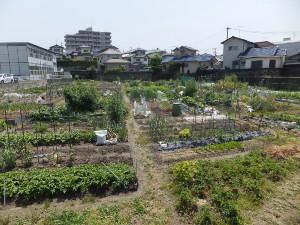 市民農園 5