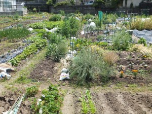市民農園 4