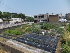 市民農園 3