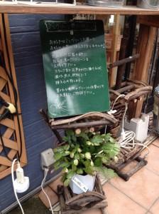 メイトフラワーガーデン春日店13