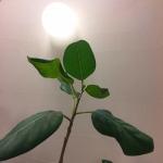 呼吸が楽な珪藻土の壁