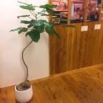 あたたかくて気持ちのいい福岡県産の天然乾燥無垢床材『耳納杉』